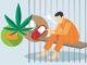 Sehari Polres Sidrap Bekuk 5 Pelaku Narkoba di Dua Lokasi