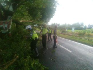 Polres Pinrang bersihkan pohon tumbang