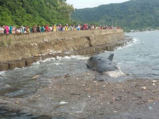 Bangkai ikan paus