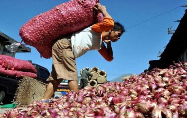 pertanian enrekang