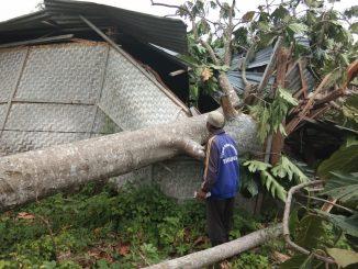 Rumah rusak ditimpa pohon rubuh akibat angin kencang di Pinrang.