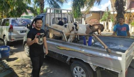 Komunitas Motor Parepare Pinrang Sumbang Kambing Kurban ke Panti Asuhan
