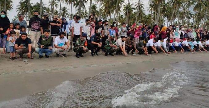 LPPLH lepas Anak Penyu Sisik di Pantai Lowita Pinrang