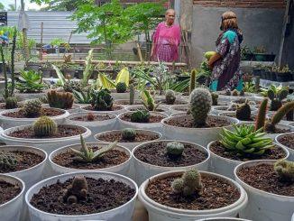 Video : Desa Patobong Pinrang Dijuluki Kampung Bunga